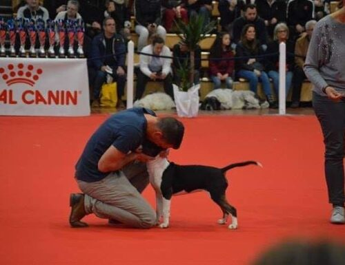 INTERNATIONAL SHOW ANGERS FRANCE – MARCH 2019